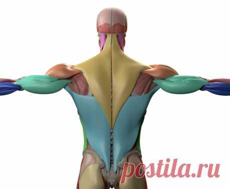 Укрепить все мышцы и избавиться от лишнего веса, используя только одно упражнение!