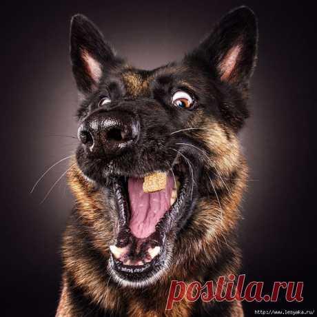 (1) Gallery.ru / Фото #1 - Как выглядит собачья радость! - Vladikana