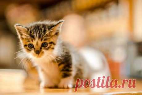 kitten5   onsen neco   Flickr