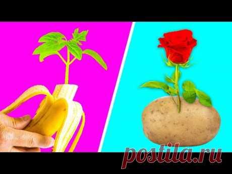ГЕНИАЛЬНЫЕ ЛАЙФХАКИ ДЛЯ САДОВОДСТВА || Быстрые способы вырастить растения!