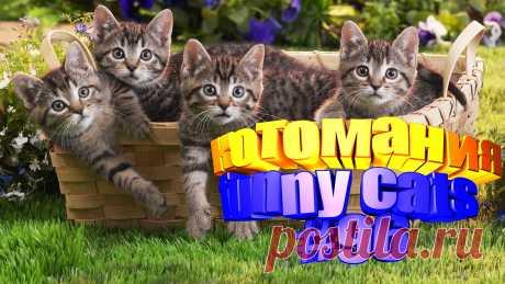 Любите смотреть приколы про кошек? Тогда мы уверены, Вам понравится наше видео 😍. Также на котомании Вас ждут: видео кот,видео кота,видео коте,видео котов,видео кошек,видео кошка,видео кошки,видео о котах, видео о кошках смешные, видео приколы, видео про смешные, видео с котиками, видео с кошками, видео смешная кошка, видео смешное о кошках, видео смешные, видео эти смешные кошки, говорящие коты, для котов видео, для кошек, и кошки, кот видео, кот смешное видео, котик, котики мило