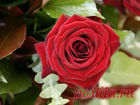 Тест - Какой цветок вам подходит, и что он о вас говорит?