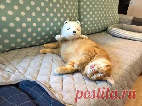 Рыжий соня: как кот стал известным, ничего не делая | Мобилография | Яндекс Дзен