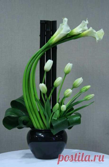 Lily Hydrangea