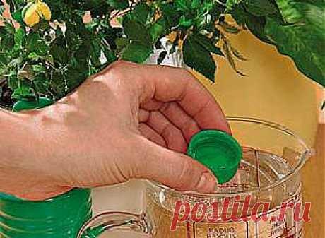 Натуральные удобрения для комнатных растений | НА ЗАВАЛИНКЕ