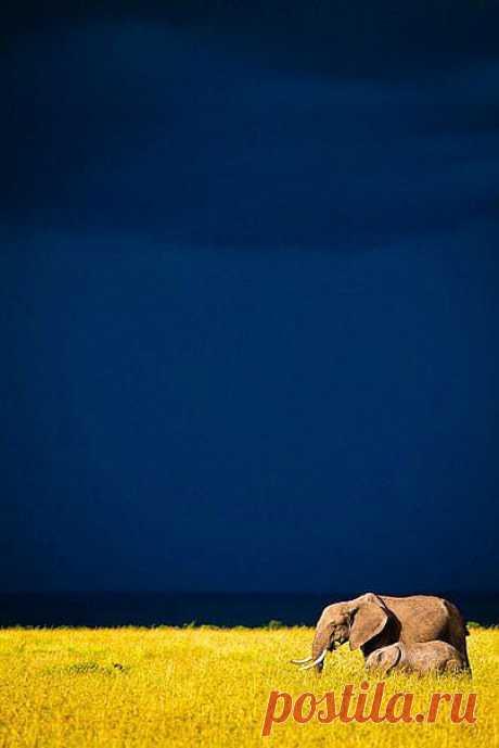 Потрясающее фото: мама-слон с сыном
