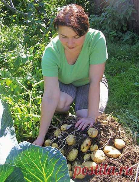 И почва «добреет», и урожай — на славу!  — Ваше Плодородие