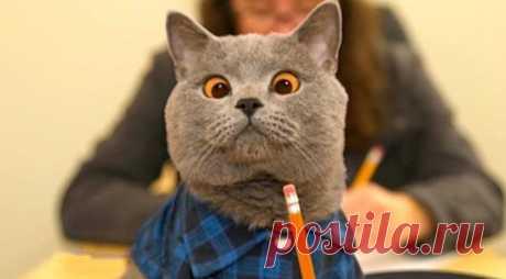 Истории от кошатников, чьи котаны постоянно вытворяют что-нибудь потешное