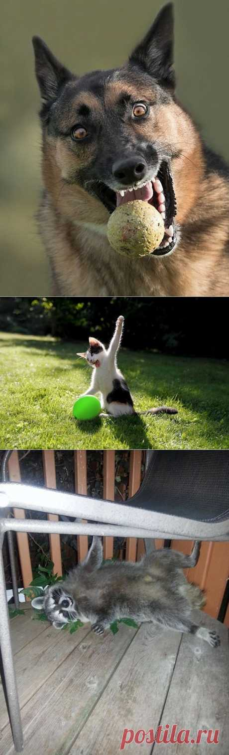 (+1) тема - Позитивные симпатяги из мира животных (ФОТО) | САМЫЙ СОК!