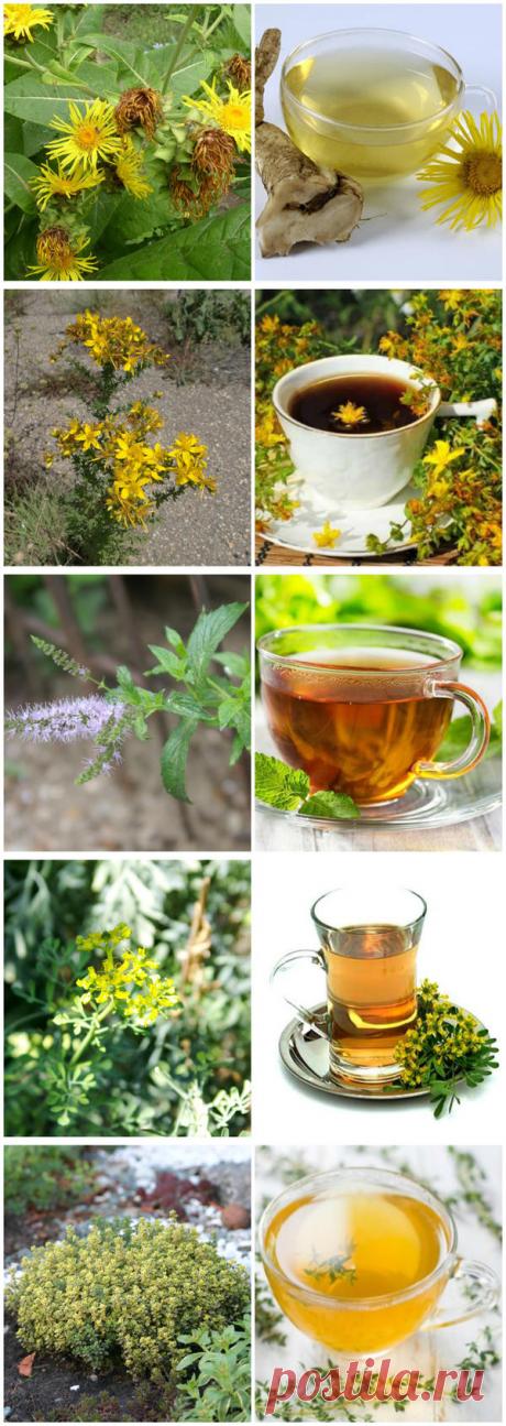 27 растений для чая
