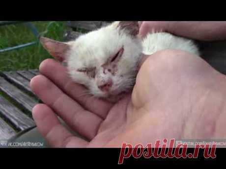 Лечение кота катушкой Мишина. Поможет ли катушка Мишина для лечения животных?