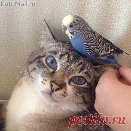 Моя синяя птица удачи
