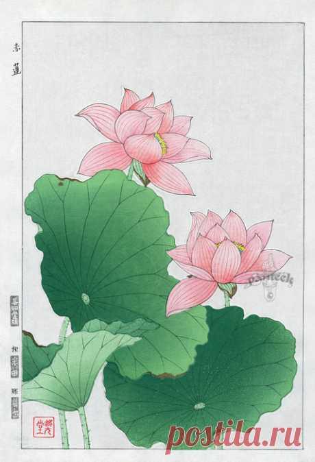 Japanese Woodblock Botanicals Shodo Kawarazaki 1939-1970's. Цветочные иллюстрации.