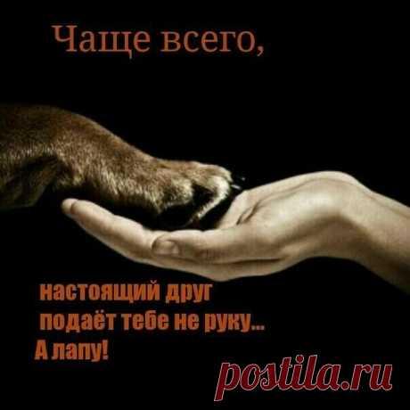 «(99) Одноклассники» — карточка пользователя Мочалова(Сенина) Елена в Яндекс.Коллекциях