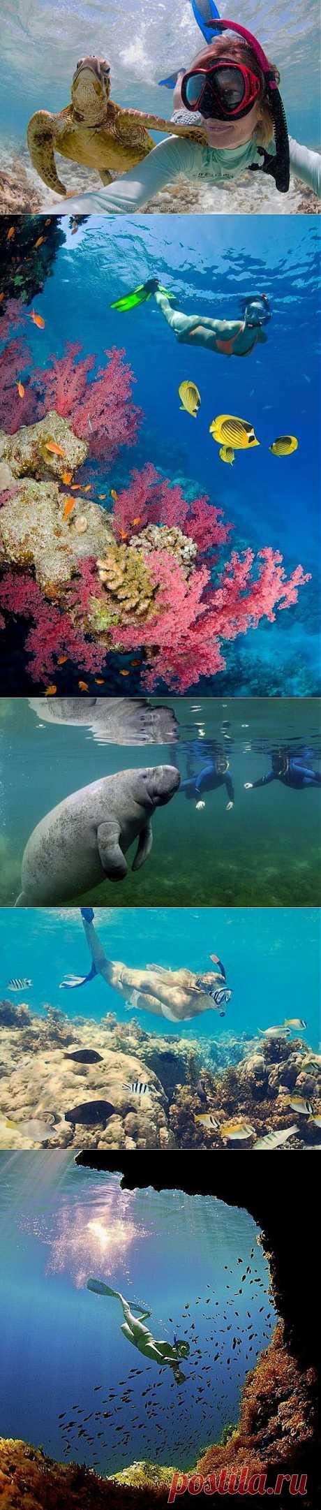Самые жипописные места подводного мира / Всё самое лучшее из интернета