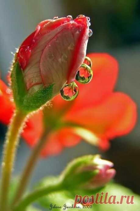 Сделай бусы из капель росы, улыбнись и надень на запястье... Мне б сегодня такие часы, чтоб не время считали, а Счастье!