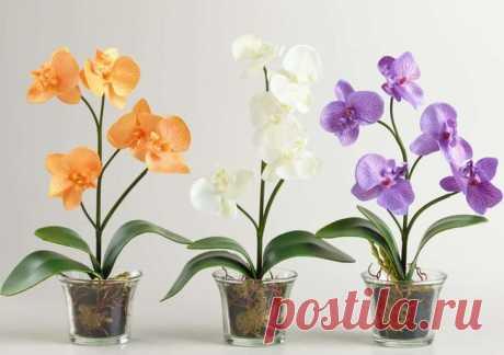 Рекомендации по частоте полива орхидеи дома в разное время года Как часто поливать в разные сезоны В летний период орхидеи, как правило, наиболее активно растут и цветут. Кроме того, выше температура воздуха в помещении. Соответственно, полив нужен более частый — ...