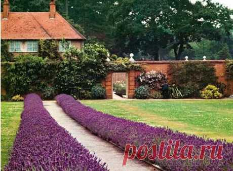 Рабатки и миксбордеры — цветы вдоль дорожек