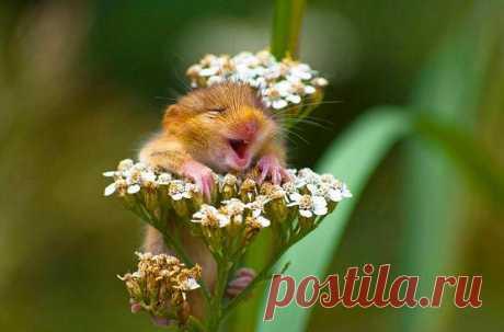 Объявлены победители веселой фотопремии Comedy Wildlife Awards за самые смешные снимки животных