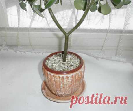Вермикулит в комнатном цветоводстве