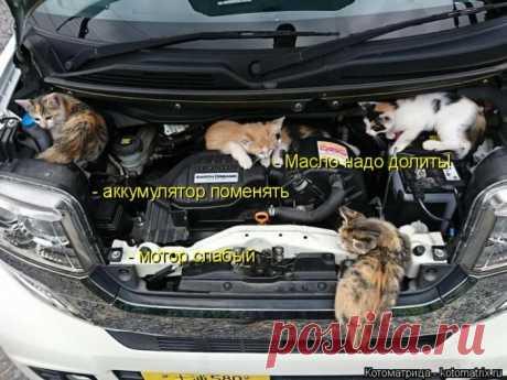 Лучшие котоматрицы недели (50 фото) Классные картинки от сайта Котоматрица.