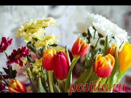 Видео работ курсантов прошлого сезона   Страна Мастеров