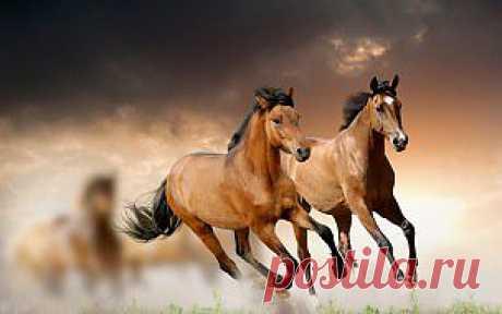 Обои животные, лошади, галоп скачать обои для рабочего стола,картинки на рабочий стол,заставки,изображения из раздела Животные Лошади
