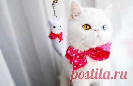 Инстаграм-когти: 11 аккаунтов необычных кошек | Питомцы | Time Out