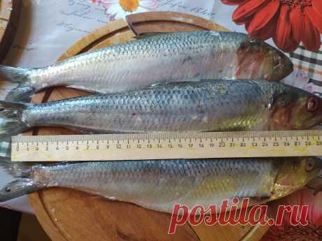Муж вернулся с рыбалки и привез рецепт приготовления селедки по-астрахански. Попробовав этот способ, я забыла про другие | Жизнь по-деревенски | Яндекс Дзен