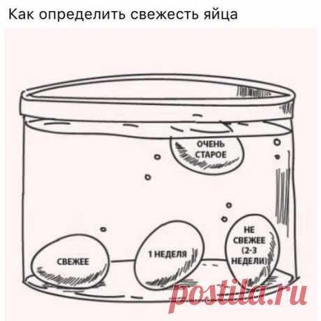 Εcли вы не увеpены, что яйцо еще cвежее, пpоcто опуcтите его в воду и вы  вcе поймете