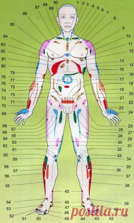 Проекционные зоны внутренних органов на теле человека по Огулову -