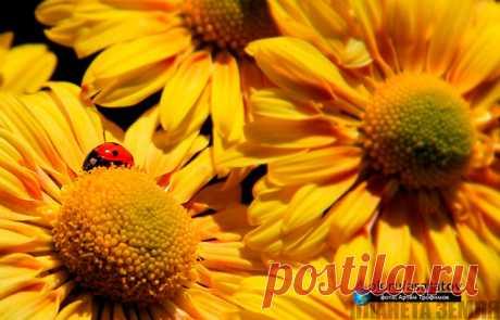 Данной темой хотелось бы украсить этот осенний, ноябрьский рабочий день и хоть чуточку приподнять Ваше настроение! Всем хорошего дня! ;)