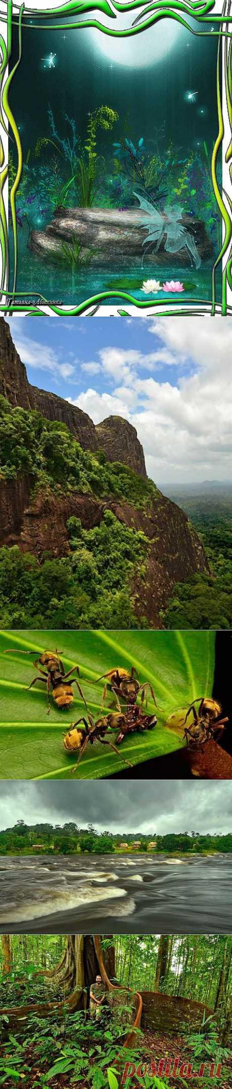 (+1) тема - Уникальная природа Южной Америки   НАУКА И ЖИЗНЬ