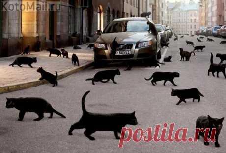 Улица для не суеверных..