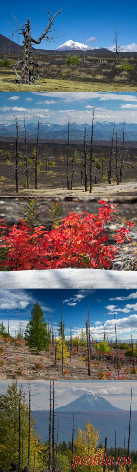 (+1) тема - Сказки мёртвого леса. | Непутевые заметки