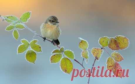 Поскольку настроение всегда бывает разным, то путь же чередуется хорошее с прекрасным!