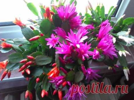 Декоративные кактусы с названиями