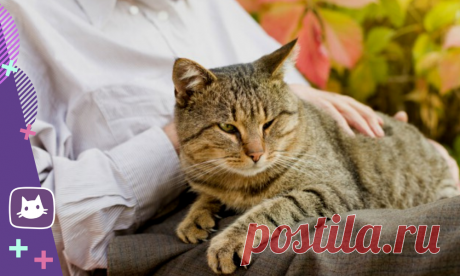 😿Какой возраст считается пожилым у кошек. Уход за пожилой кошкой | Нос, хвост, лапы | Яндекс Дзен