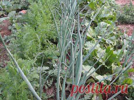 Взаимоотношения растений