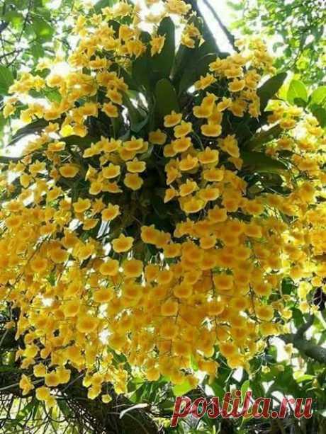 Բարի լույս բոլորիս🌷 🌹🌺❤️Լավ օրը սկսում է բարի մտքերից և հաճելի գործերից։Ամեն դեպքում կյանքում ամեն ինչ կկարգավորվի! Այն,ինչ չի հարթվի, դա կմառացվի! Թող Ձեր մոտ լինի հենց այդպես․․․Շռայլենք իրար ժպիտ ու ծիծաղ, Միշտ բարի խոսքեր, Ծաղիկներ ու սեր...Եվ թող լինի ամեն ինչ լավ...Առանց առիթ, առանց պատճառ․․․ 🌹🌺❤️  ОРХИДЕЯ! Невероятный цветочный салют.