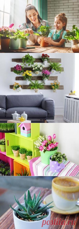 Домашние растения с целебными свойствами
