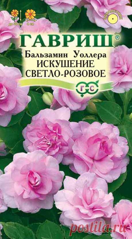 """Бальзамин Уоллера """"Искушение светло-розовое F1"""""""