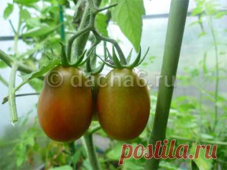 Правильный полив помидор в июле-августе
