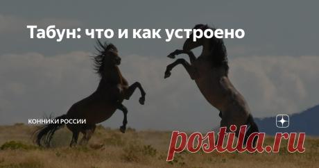Табун: что и как устроено На первый взгляд в конном обществе все равны. Но если копнуть глубже, долгое время наблюдать за поведением лошадей, вы можете обнаружить иерархический строй. Сегодня вы узнаете, в чём это проявляется.