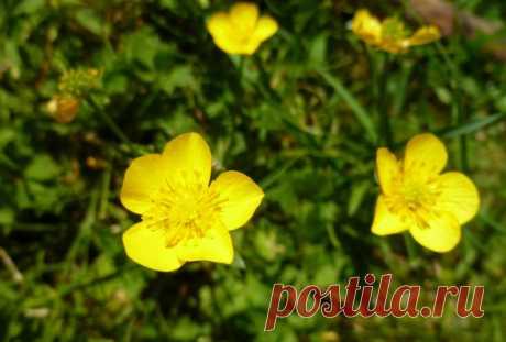 GISMETEO.RU: Красивые и опасные: растения, которые лучше обходить стороной - Природа | Новости погоды.