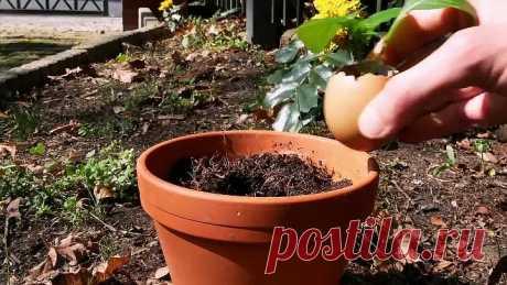 18 Простых Трюков, Которые Помогут Растениям в Доме Цвести и Благоухать
