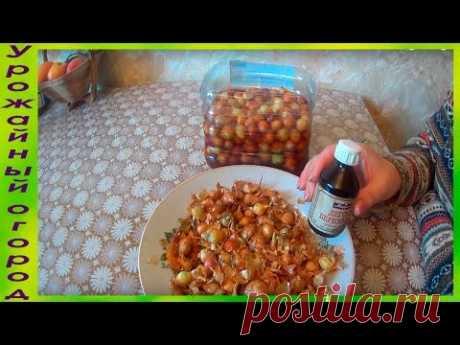 (3) СУПЕР СРЕДСТВО ОТ ЛУКОВОЙ МУХИ!!! - YouTube