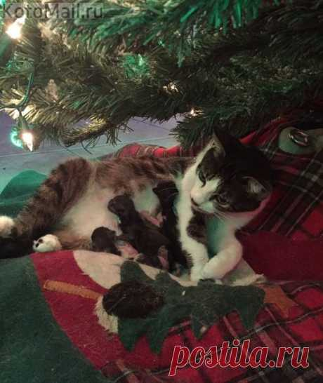 Рождественское чудо - новорождённые малыши под ёлкой