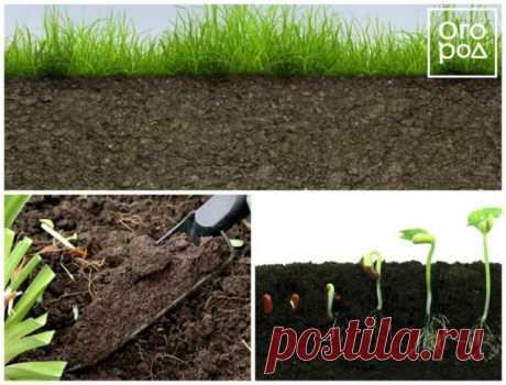 """Как повысить плодородие почвы и защитить растения от болезней без """"химии""""   Почва и плодородие (Огород.ru)"""