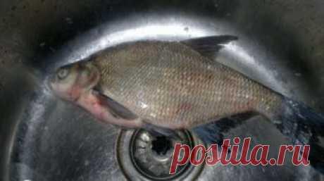 Чистим речную рыбу от чешуи : Рыбные блюда